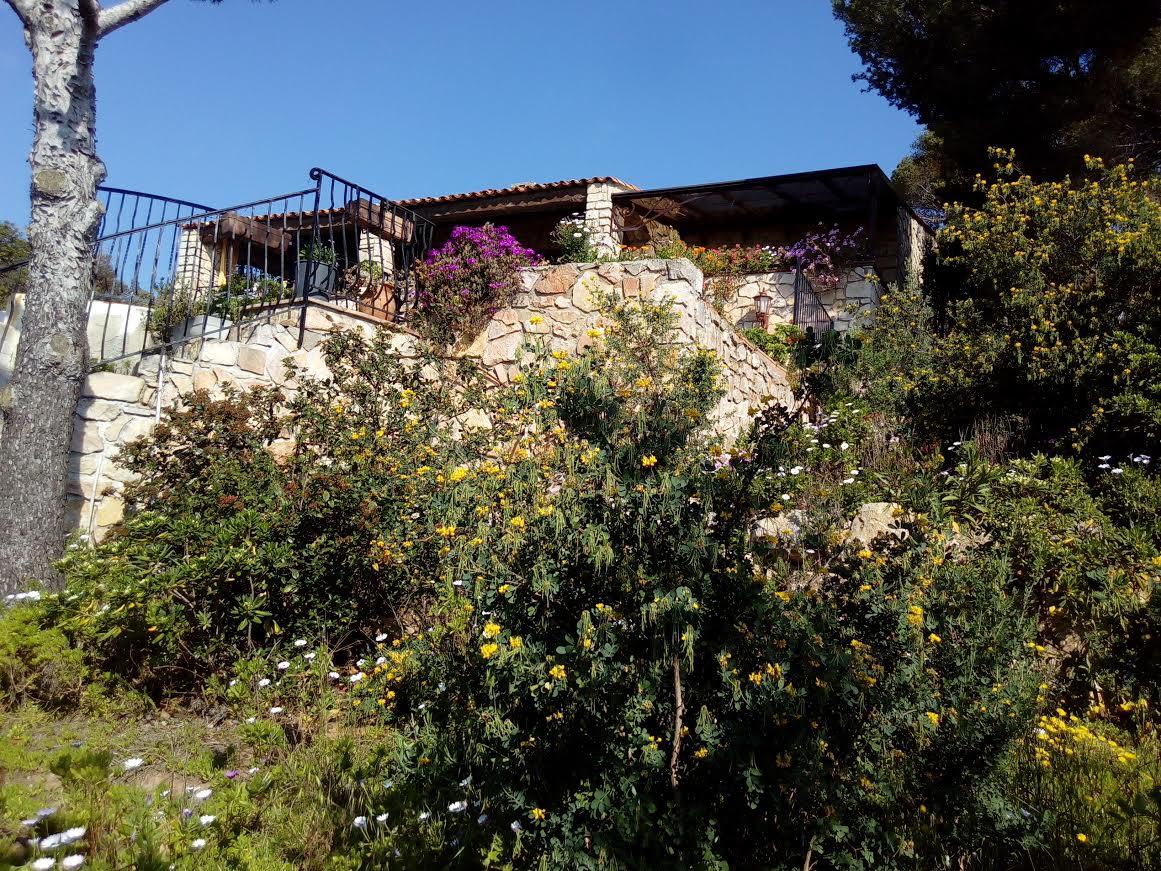 Les essences méditerranéennes de la pinède