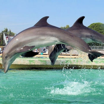 Marineland à Antibes