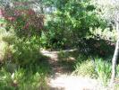 Le mimosa-chenille à l'est se voute sur le chemin