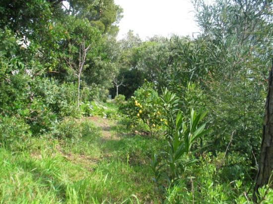 Le citronnier, exposé au sud