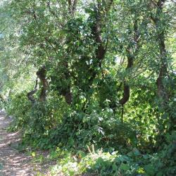 La pinède, à l'ouest de la propriété